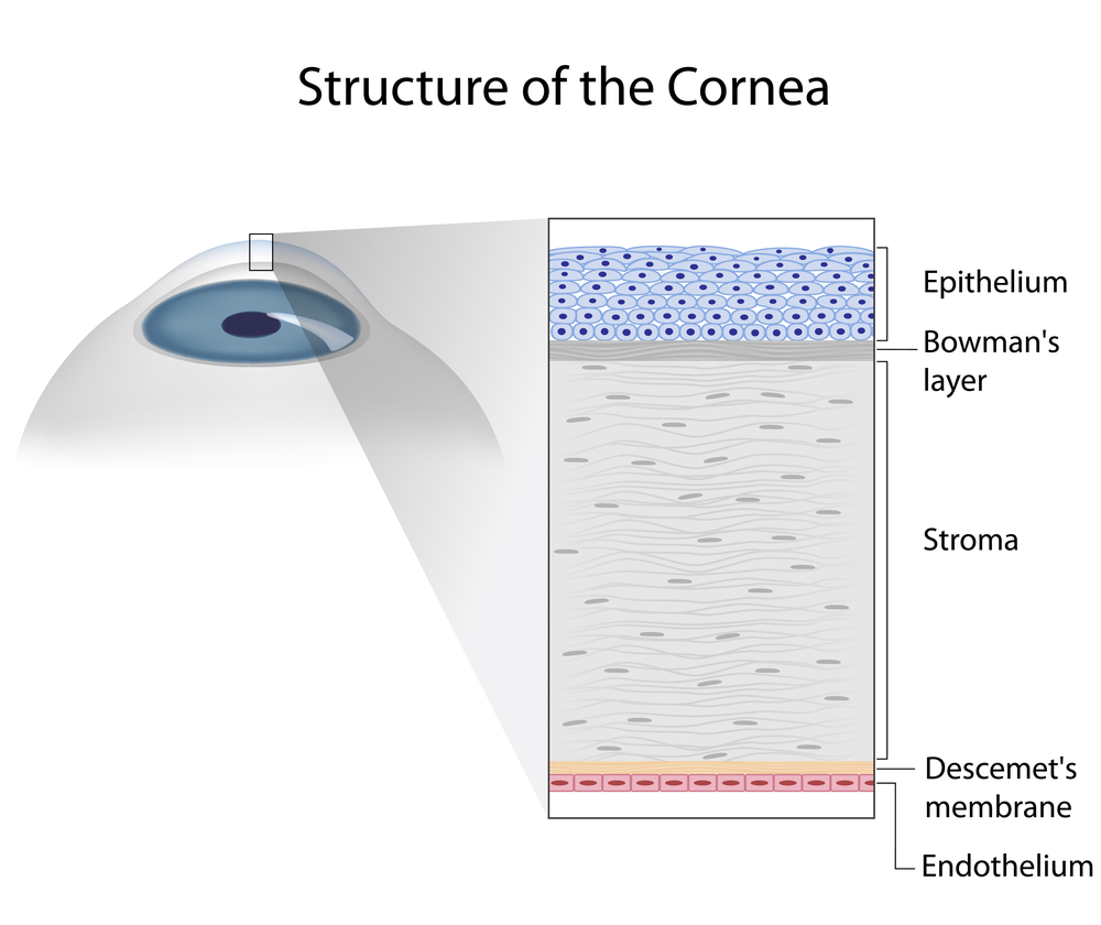 Understanding and Treating Corneal Scratches and Abrasions ...